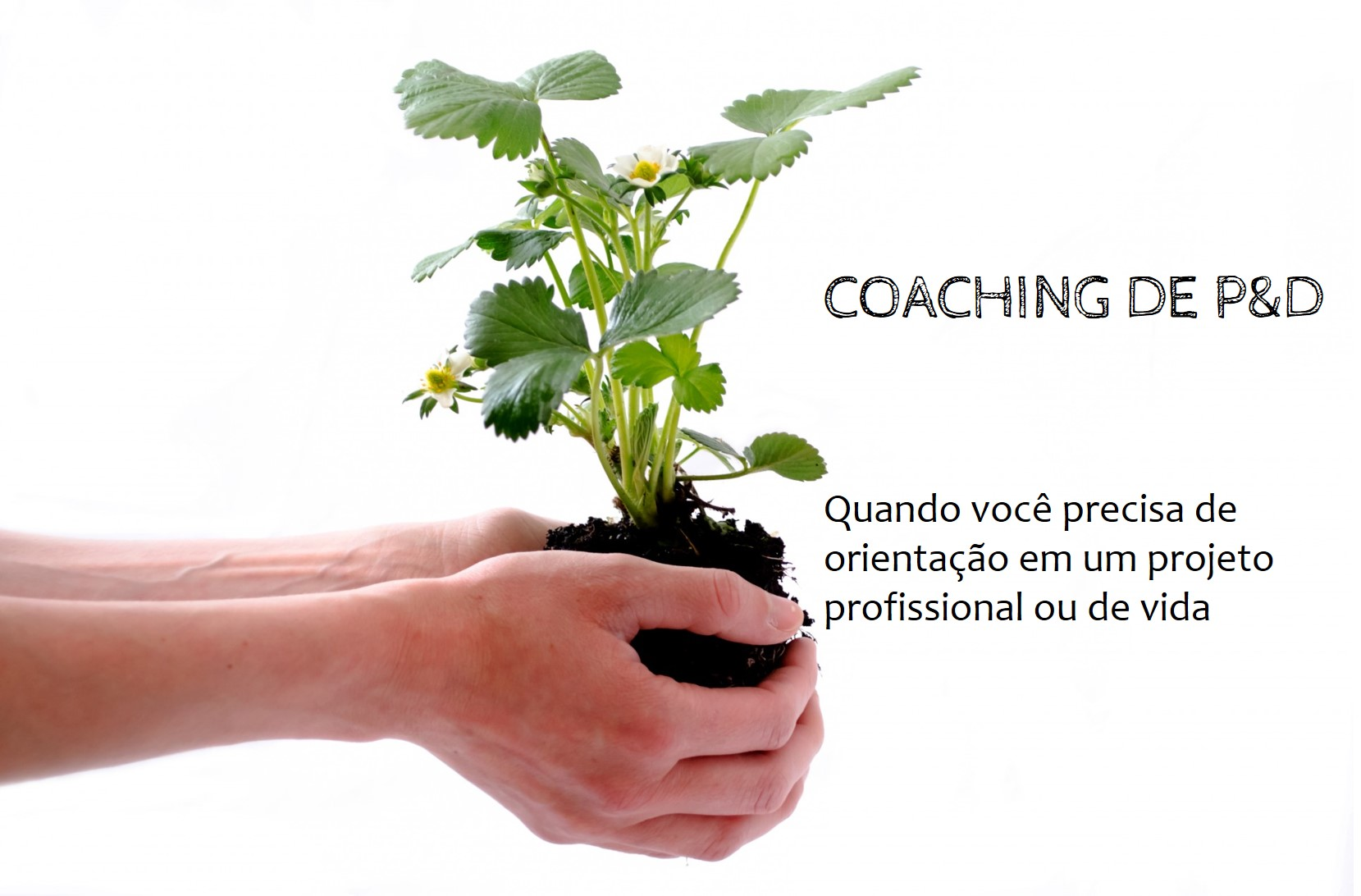 Coaching de PeD
