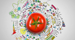 curso p&D inovação alimentos