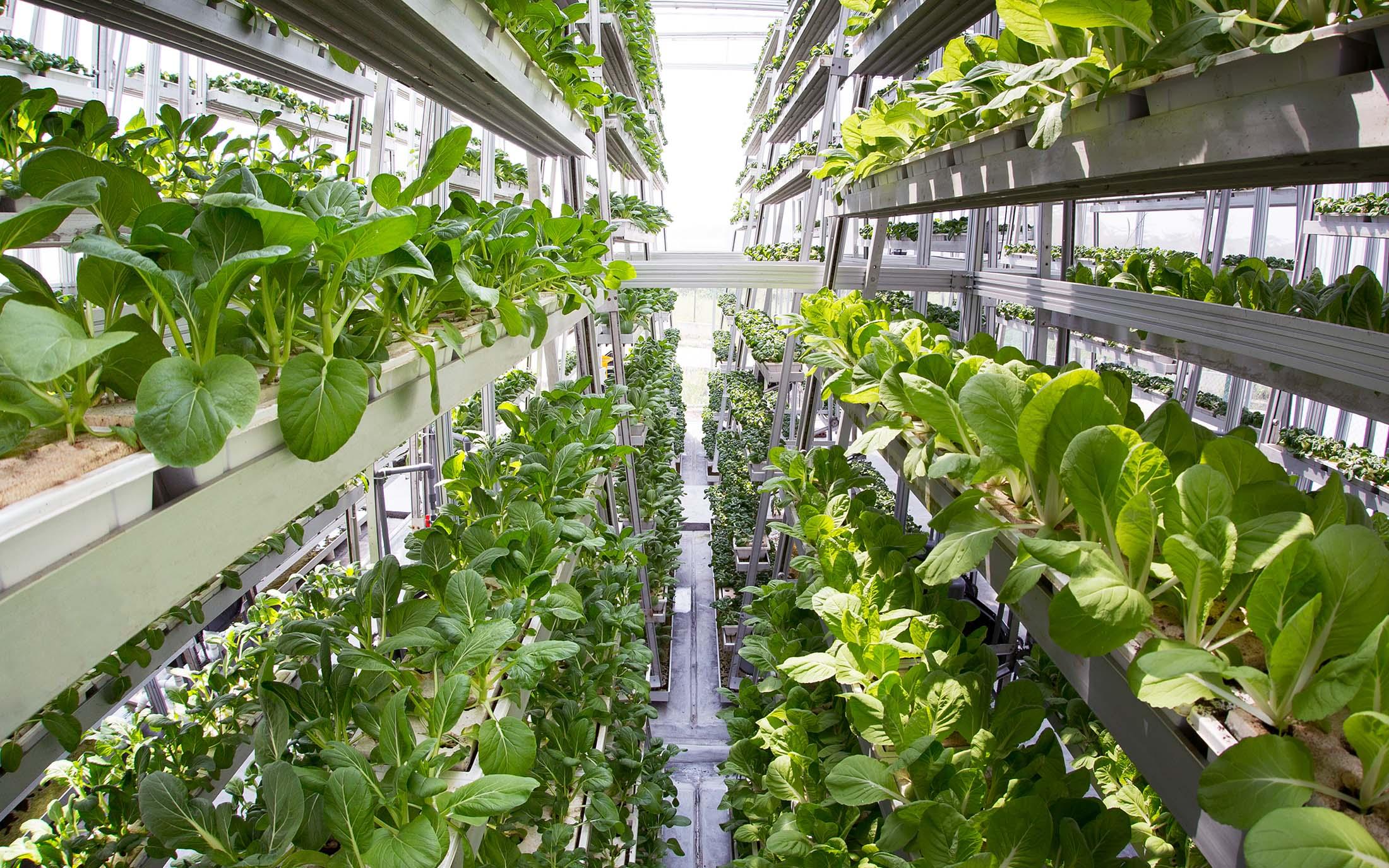 comida, tecnologia, P&D, alimentos, R&D, food, engenharia, ciência, pesquisa, desenvolvimento, oportunidade, sra inovadeira, inovação,tecnologias disruptivas para produção de alimentos, 3d, fazenda, vertical, urbana